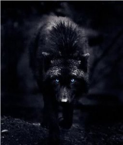 ____Black_Wolf_____by_XxJared_Leto_